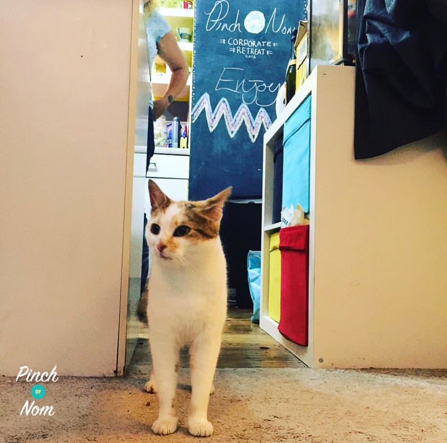 At the very first Pinch Of Nom gathering, the cat came from nowhere!